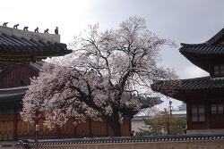 근대역사가 숨어있는 서울 정동길 투어