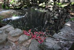 다산초당의 봄