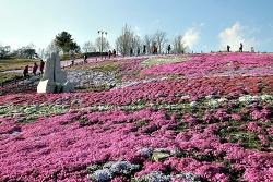 생초국제조각공원, 생초꽃양귀비축제