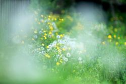 봄 날....