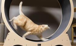 상상 초월 고양이 캣휠 사용기