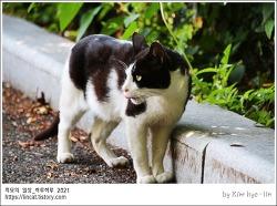 [적묘의 고양이]젖소 고양이, 경계의 단계,여름의 시작,학교풍경, 고양이, 한낮, 오후의 햇살