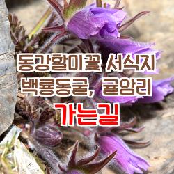 동강할미꽃 군락지 가는길, '백룡동굴 동강 할미꽃, 귤암리 동강 할미꽃'