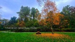 Tynehead regional park