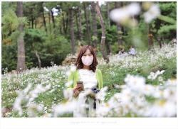 파주 율곡수목원 구절초, 하얀 눈꽃 속에서