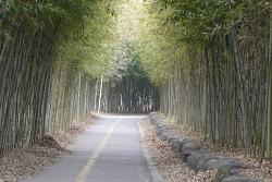 [20210225]안양천 상류, 의왕 안골 대나무숲