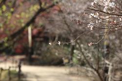 창원 여행 춘추벚나무꽃이 피어나는 진해 내수면 환경생태공원