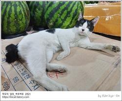 [적묘의 고양이]시장고양이,판매부장,반여농수산물시장,수박철,여름과일,과일사세요