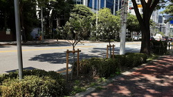 [20210614]안양 관평로·부림로·벌말로, 3개 노선 명품녹색길 만든다