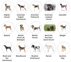 개종류 총정리 / 애완용, 소형, 중형, 대형 강아지