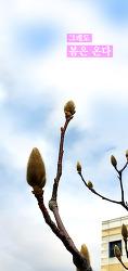 (허니컴) 그래도 봄은 온다