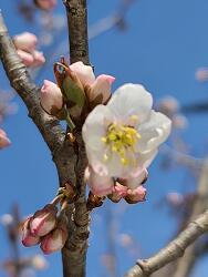봄이 왔어요~