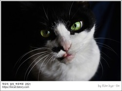 [적묘의 고양이]요물,간식을 내놔라,집사의 소명,할묘니,16살 노묘