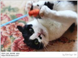[적묘의 고양이]할묘니,16살고양이,출근방해,딩굴딩굴,캣닙위력,아침 운동