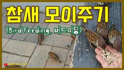 참새 모이주기 - Bird Feeding (참새들의 식사시간)