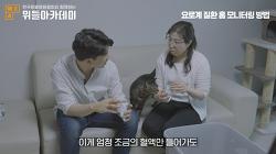 위들아카데미, 고양이 요로계 질환 라이브 방송 성황