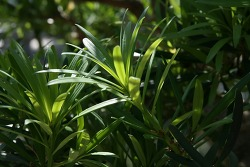 미세먼지에 좋은 공기정화 식물 6가지