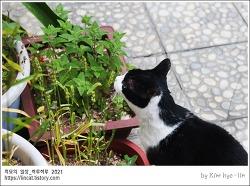 [적묘의 고양이]캣글라스,밀농사,16살할묘니,집사의 농심,고양이 키우려다,밀꽃,노묘