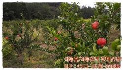 석류의 맛과 영양이 가득한 석류즙을 고흥석류농원에서 판매합니다! 새콤하고 영양만점 석류를 편하게 즐겨보세요