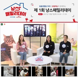 로얄캐닌, 고양이 입양 가족의 날 '냥스패밀리 데이' 개최