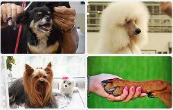 서강전문학교 애완동물계열 운영으로 반려동물 전문인력 양성