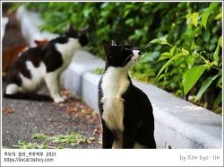 [적묘의 고양이]캣닙을 키우는 이유, 노묘와 길냥이, 학교냥, 냥바냥, 고양이를 위한 농사, 같은 턱시도 고양이, 다른 느낌