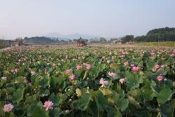 15. 함안 연꽃테마파크와 옥수홍련·옥수늪