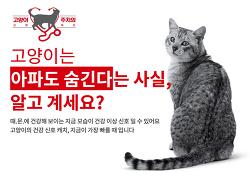 10가지 체크로 고양이 건강진단 해 보세요.