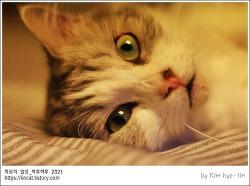 [적묘의 고양이]고양이사진tip,눈높이 맞추기, 옆에 눕기,같이 숨쉬기,친구님네 먼치킨,뱅갈고양이,주말필수요소