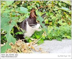 [적묘의 고양이]학교고양이,숨은고양이찾기,참쉽죠~,모닝캣닙타임,개박하를 키우는 이유