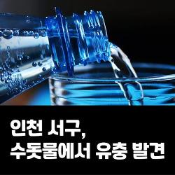 인천 서구, 수돗물에서 유충 발견 '5개동 내 모든 학교 급식 중단'