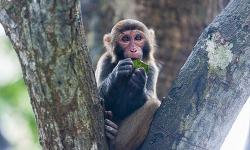 죽은 원숭이 해부한 중국 수의사 바이러스 감염 사망
