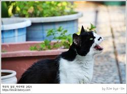 [적묘의 고양이]주말옥상풍경,16살할묘니,꿀떨어지는 눈빛,옥상에서 야옹거리는 이유