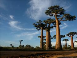 영원한 KOICA man 송인엽 교수 [나가자, 세계로! (137)] 102. 마다가스카르(Madagascar)