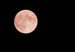 [20210625]분홍빛 달 '스트로베리 문'이 떳습니다