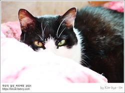 [적묘의 고양이]할묘니가 피곤한 이유,노묘,고양이의 본능,언박싱,16살고양이