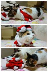 산타옷을 입은 룬과 터키