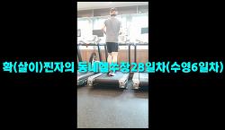 7월8일훈련ZIP-'확(살이)찐자의 동네헬쑤장28일차(수영6일차)'