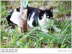 [적묘의 고양이]학교 턱시도 냥이, 민폐주차, 주차선 물지 마, 시동 걸기전에 확인할 것
