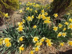 산들에 봄꽃들