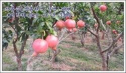 새콤달콤한 맛을 지금 바로 만나보세요~ 건강한 맛을 느낄 수 있는 석류원액!