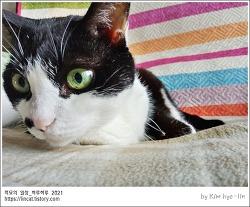 [적묘의 고양이]16살 할묘니,주 서식지,침대,소파,노묘 꼬시기,간식간식,2006년생 고양이