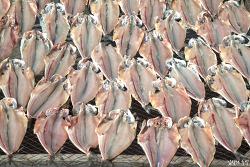 당신의 '임연수어'가 맛이 없는 이유(언제 어떻게 먹어야 맛있을까?)