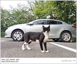 [적묘의 고양이]학교고양이와 함께,교원자격증,1정연수,여름하늘,매일매일 아침 인사,여름방학 동안
