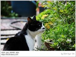 [적묘의 고양이]가을 정원,깻잎,씨발아,파프리카,할묘니는 바랭이풀,청명한 하늘