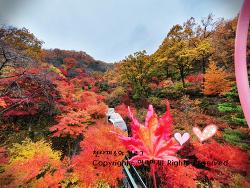 곤지암 화담숲 가을 단풍 구경