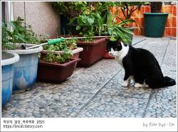 [적묘의 고양이]고양이정원, 가을 느낌,아직도 푸른 정원, 추석 전엔 초록초록,애호박,파프리카,완두콩