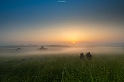 목장의 아침(1)