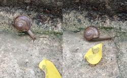 두 쌍의 촉각에 의지해 힘겹게 길을 가는 달팽이 - 근접 촬영