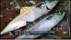"""""""최상품 고등어"""" 구분방법"""